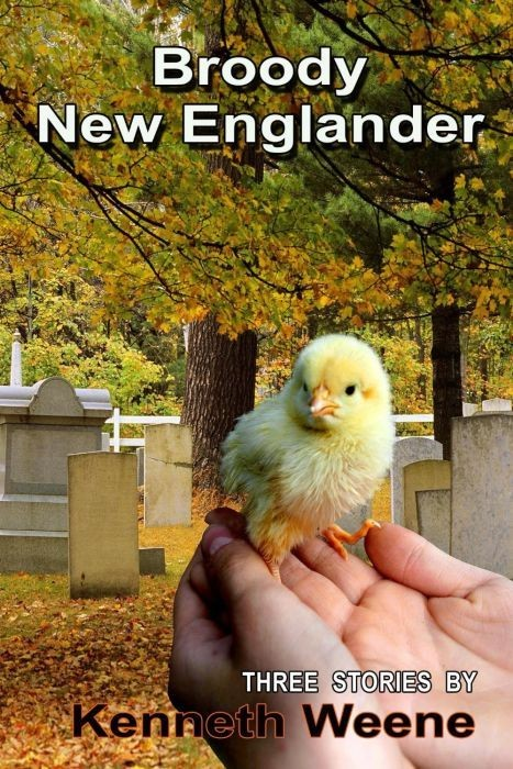 Broody New Englander
